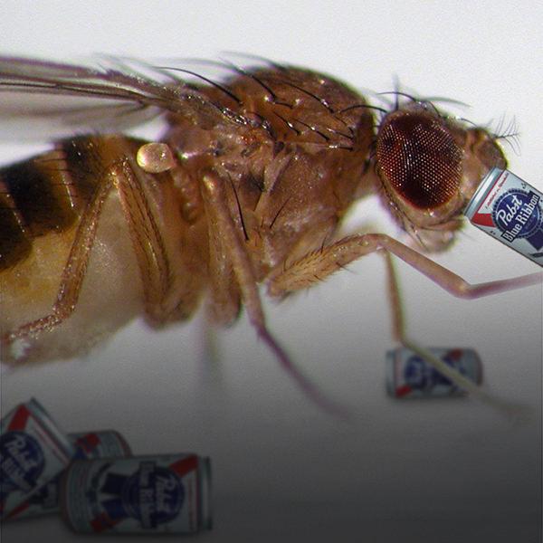 moscas cerveja