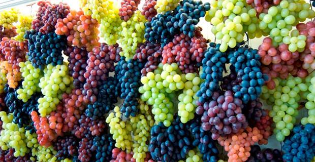 Manual do vinho tipos de uva parte 2 - Variedades de uva de mesa ...